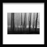 Tractus Arbor